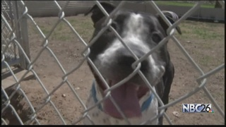 New strain of kennel cough hits area