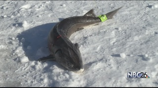 Sturgeon Spearing Opener doesn't disappoint