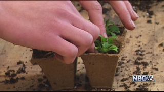 Greenhouse growing plants and students minds