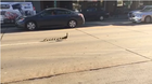 Teamwork: Ducklings get help crossing busy road