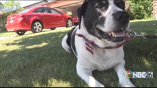 Law protects people who help dogs in hot cars