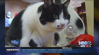 Shelter expands feline fostering to adult cats