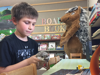 Video: Hedgehog encourages kids to read