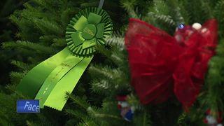 Contest to determine White House Christmas Tree