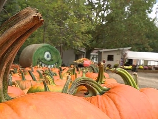 Small Towns: Blaser's Acres offers fall fun
