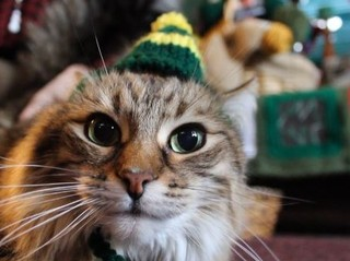 Wis. woman knits green and gold hats for cats