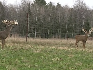 Small Towns: Prime Hunt Incorporated in Mosinee