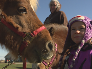 Fundraiser aims to get therapy horses a new home