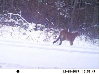 DNR confirms cougar sighting in Fond du Lac Co.