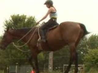 An Oneida ranch offers therapy on the pasture